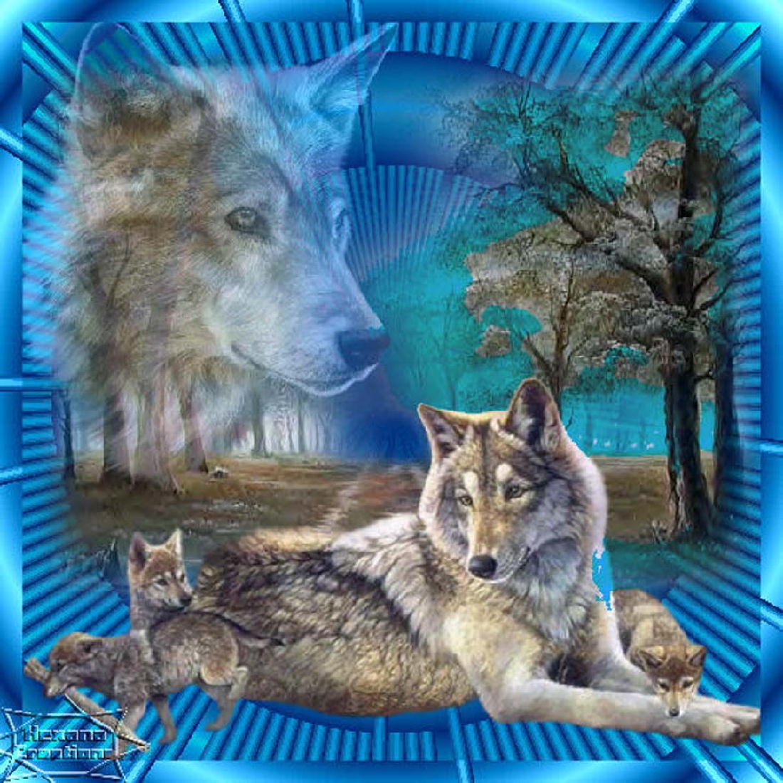 fond d'ecran loup